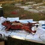 Roasted suckling pig!