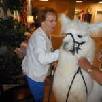 Shirley with Pete the llama.