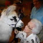Ann kisses Pete the Llama