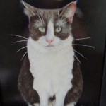 Realistic cat painting.